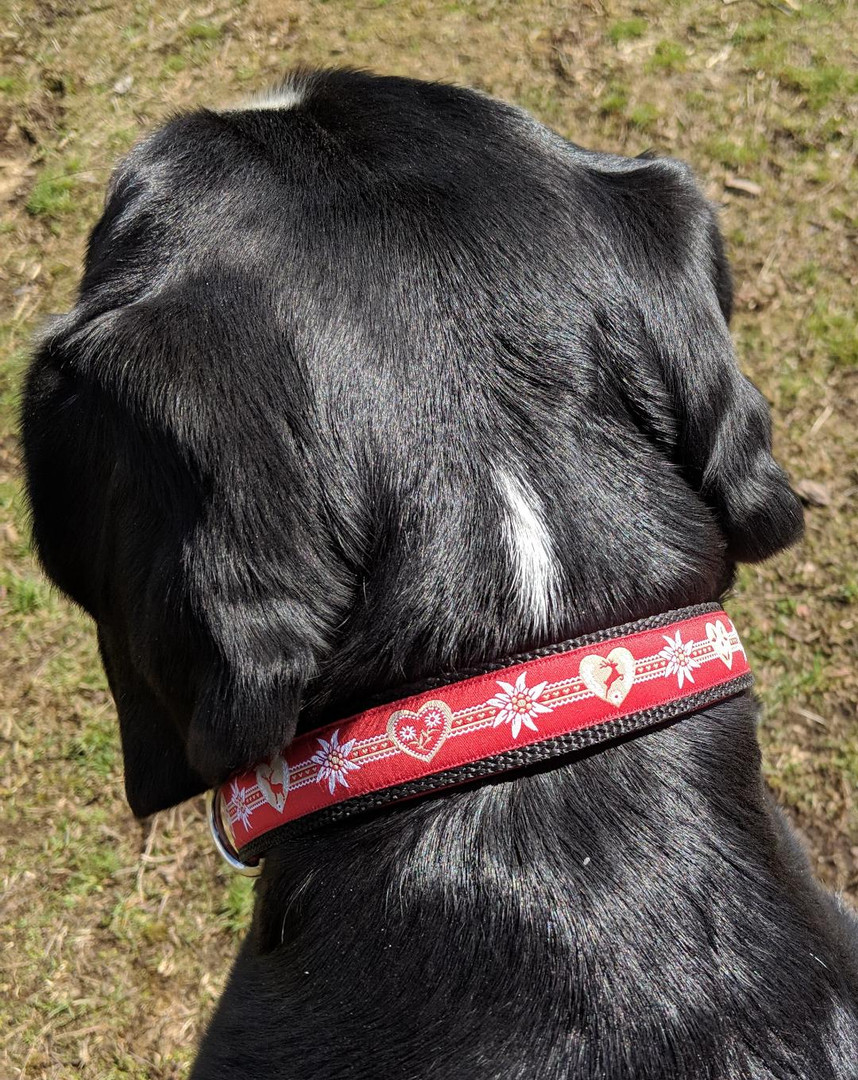 collar red deer and edelweiss ribbon Lun