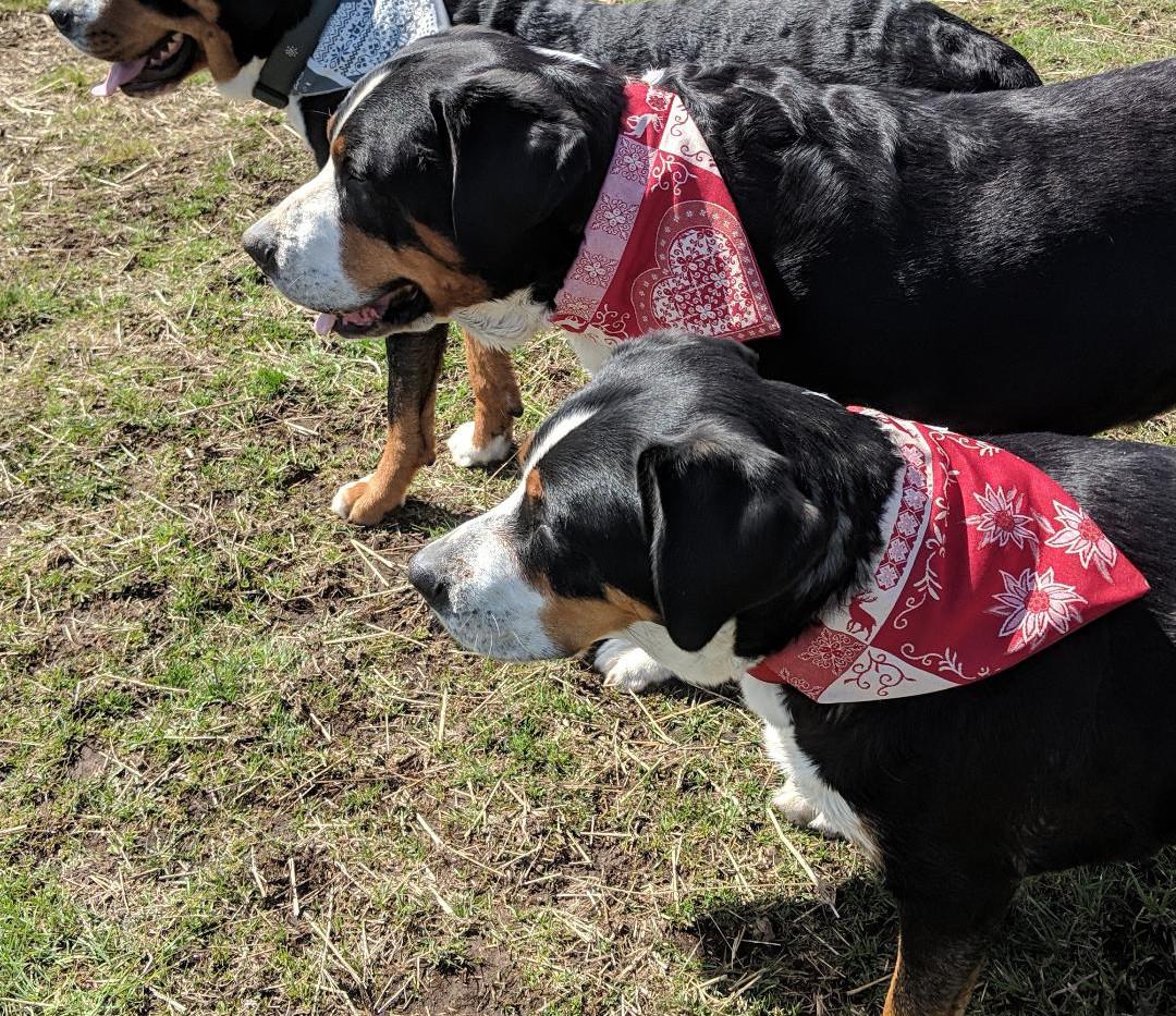 bandanas three dogs.jpg