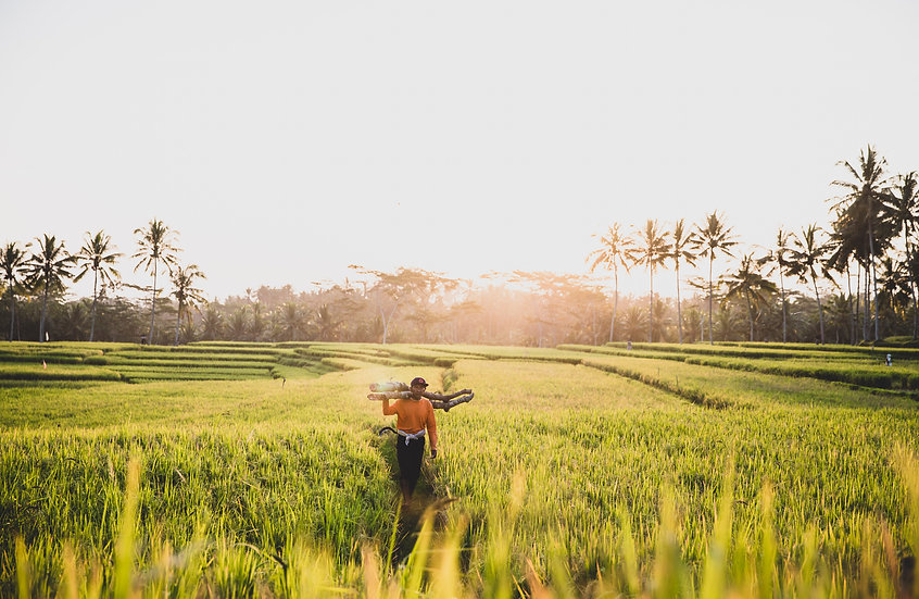Locals in the Ricefield, Bali