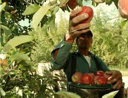 Fruticultura: Informe Sectorial CEP