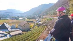 車の少ない道の眼下には、お茶の畑。