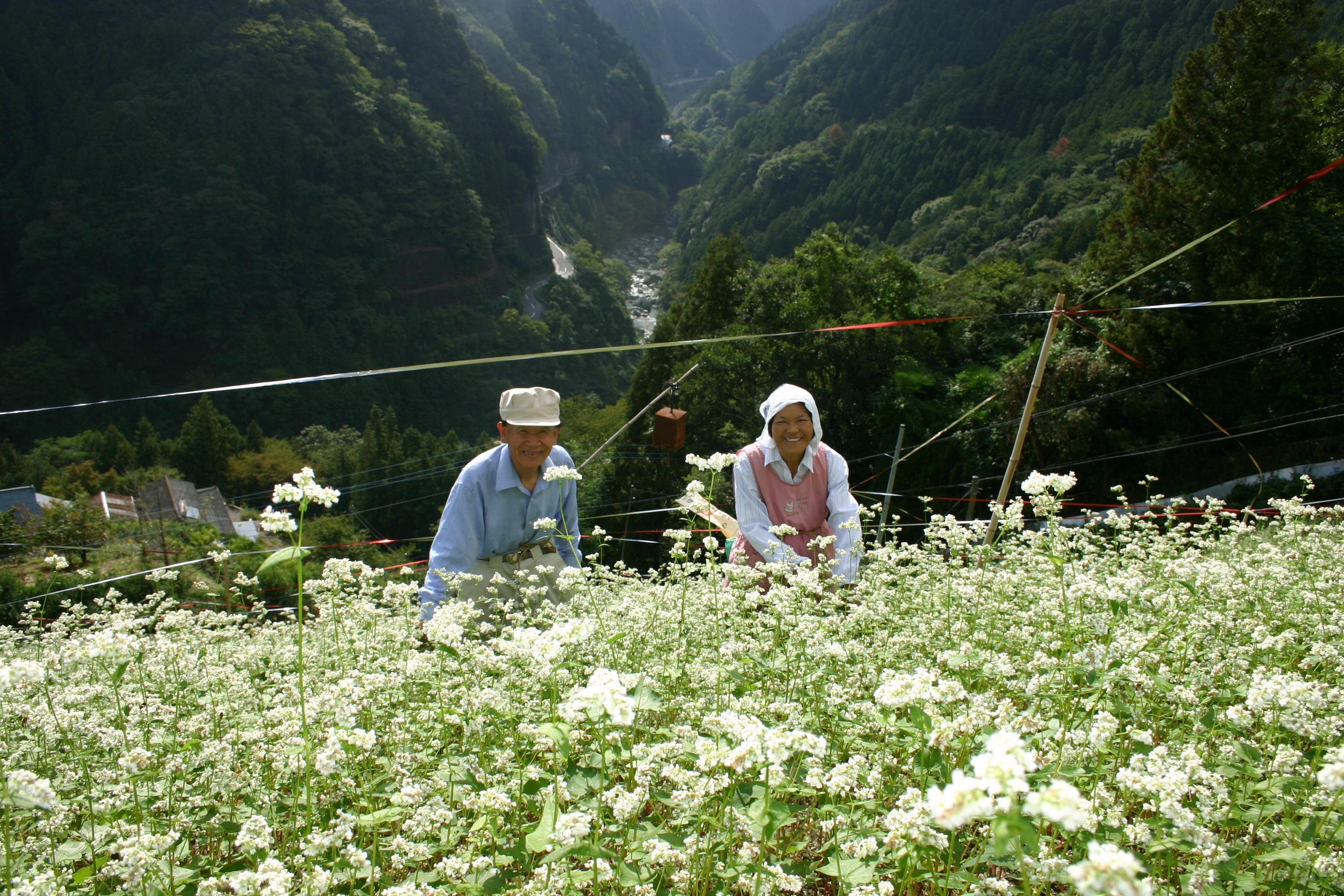 世界農業遺産に認定された、急傾斜のソバ畑。
