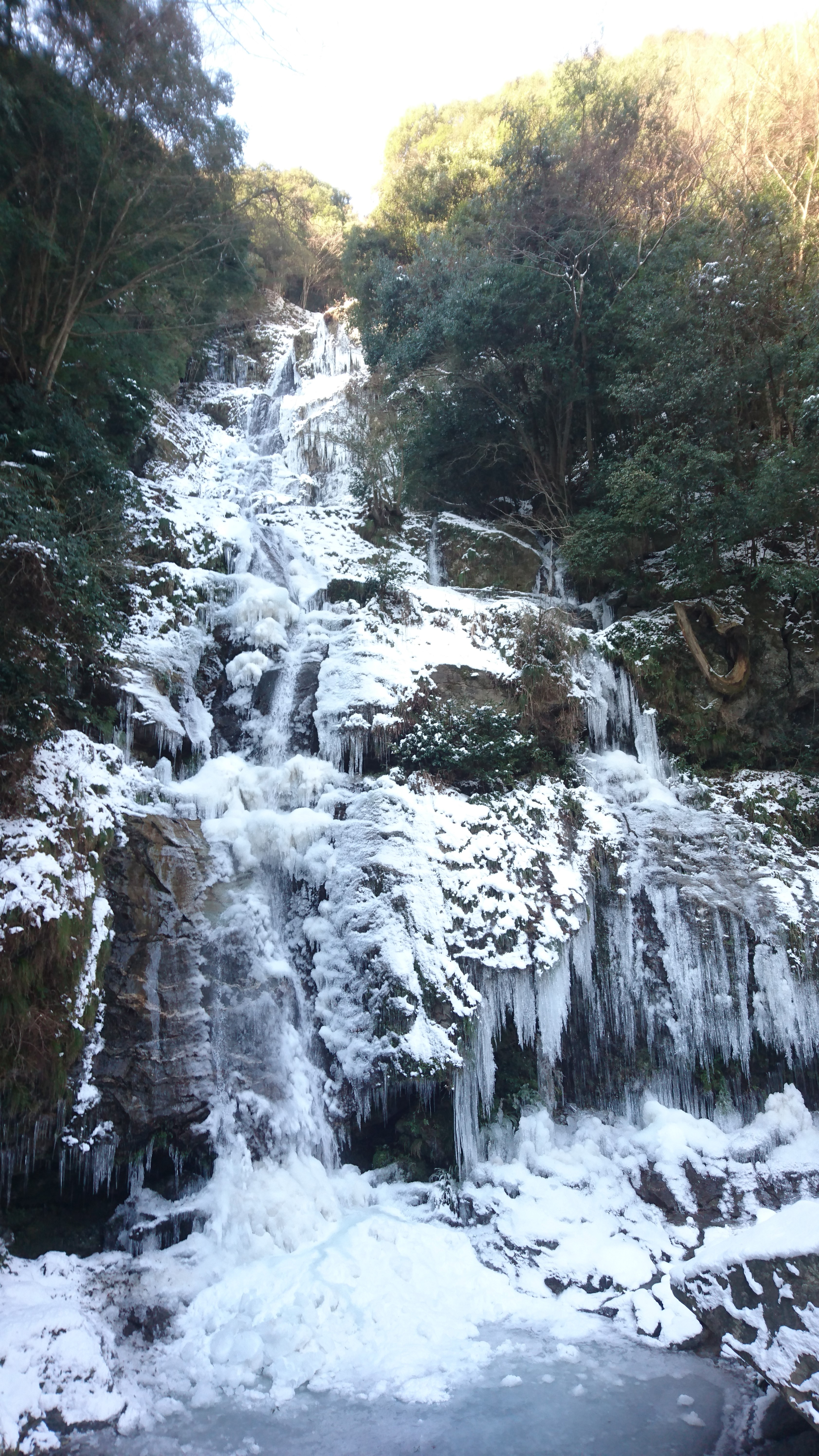徳島県内随一の落差を誇る鳴滝の氷瀑。