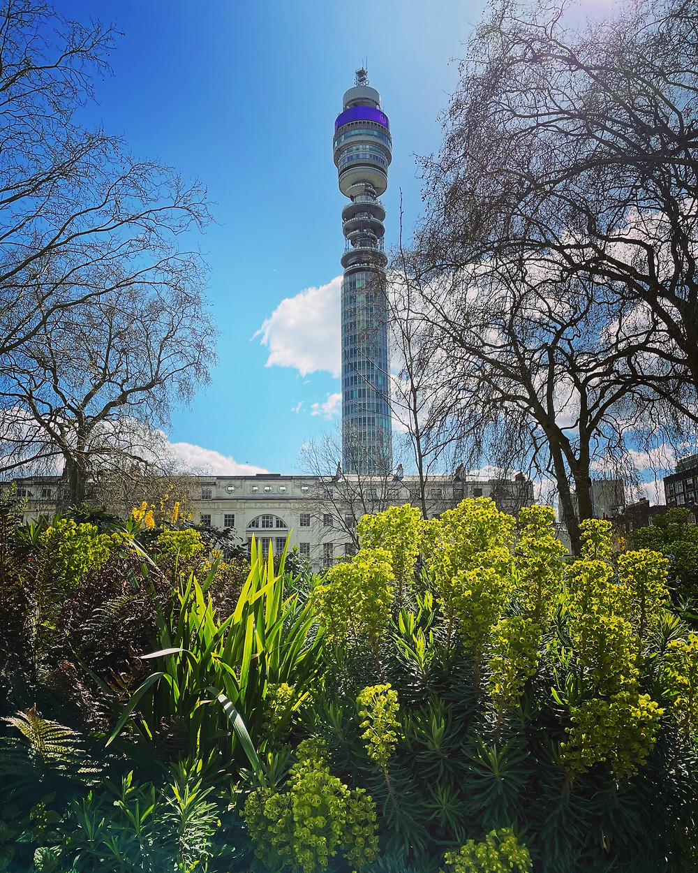 Fitzroy Square with view of BT tower euphorbia in foreground London Spring