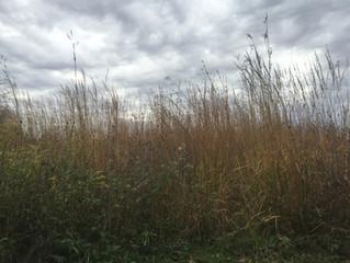 Buried Treasure: Converting Champaign County's Swampy Prairies to Farmland