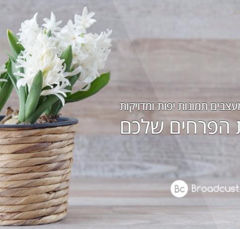 פרסום חנות הפרחים שלכם בעזרת תמונות מעוצבות ומקצועיות