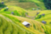 agriculture-country-countryside-crop-572