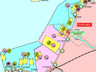 木古内湾のマコガレイ
