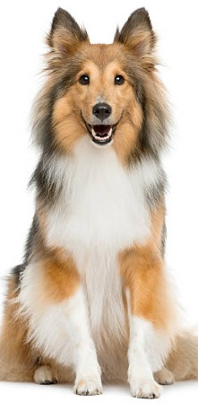 Dog grooming in nanaimo tall image 2.jpg
