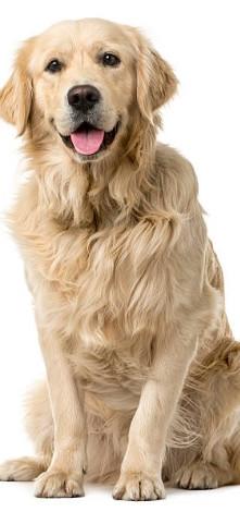 Dog grooming in nanaimo tall image.jpg