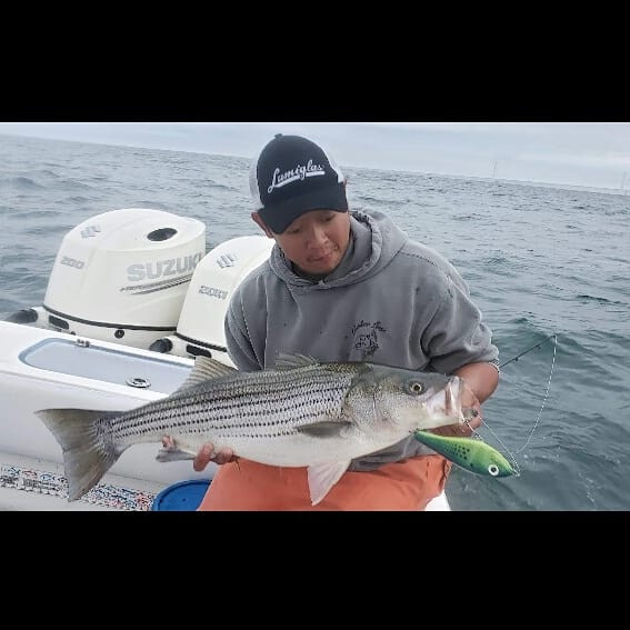 Striper on a Predator3.jpg