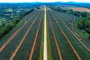Del-Monte-Plantation-Bukidnon-Aerial-Vie