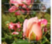 Les roses DEM LHB.png
