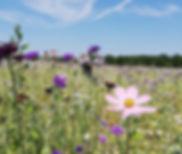 Parcelle en fleur (1).jpg