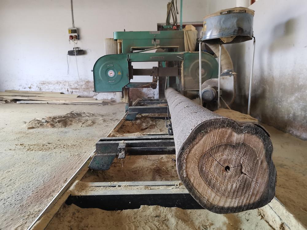 Paulownia Cotevisa 2 ipari császárfa faanyag