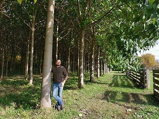 8 - Cotevisa 2 ipari császárfa ültetvény