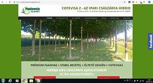 Marketing Pécs, SEO Pécs, weboldalfejlesztés Pécs, chatbot fejlsztés pécs