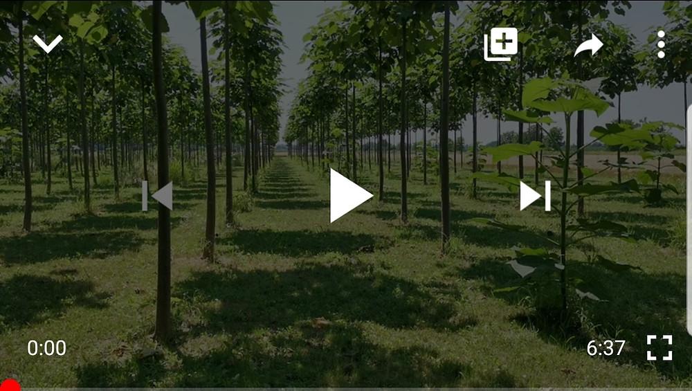 Cotevisa 2 ipari császárfa ültetvények titka