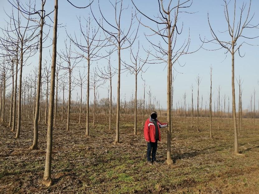 2 ültetvény 2 éves ültetvény télen