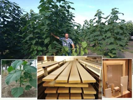 Cotevisa 2 az új kínai császárfa hibrid