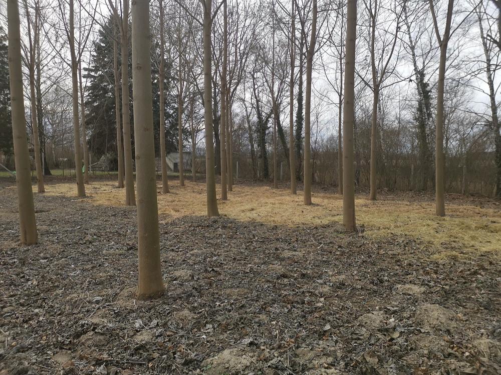 Terület északi része. Terület előszítés gombatermesztésre.  Erdei gombák jó eséllyel kinevelhetőek a terület északi részén.