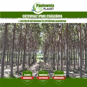 Ipari császárfa - Cotevisa2 - Paulownia Planet