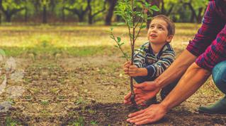 Egy fával a klímavédelemért