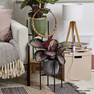 Beltéri kaspók Németországból QX Pécs home decor áruház lakás dekor