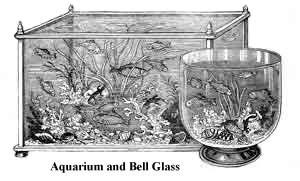 Az akvarisztika története