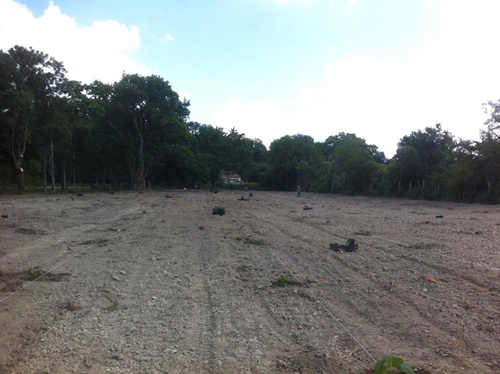 2014-ben a talaj akkori állapota az ipari császárfa ültetés idején.
