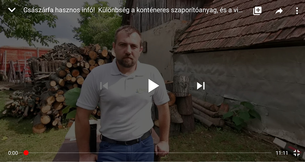 Császárfa palánták, tövek, szaporítóanyagok közötti különbségek