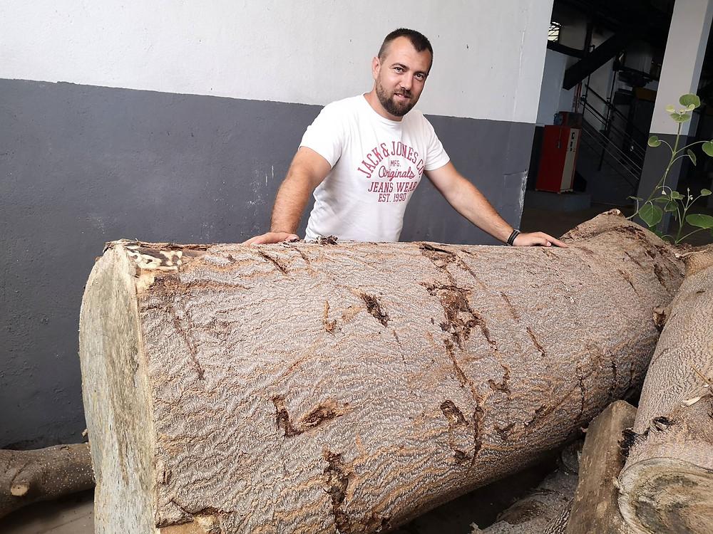 Cotevisa 2 ipari császárfa 10 éves