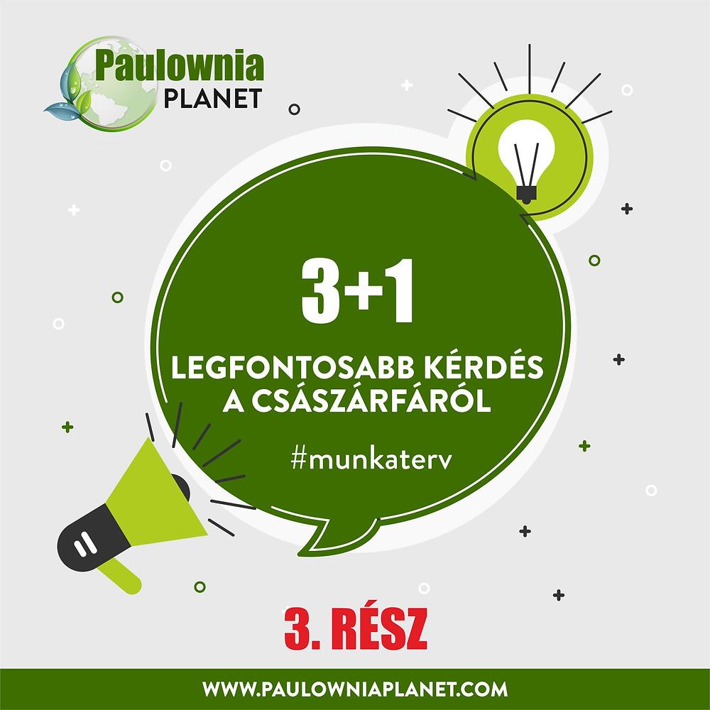 Paulownia Planet ipari császárfa 3 plusz 1 legfontosabb kérdés