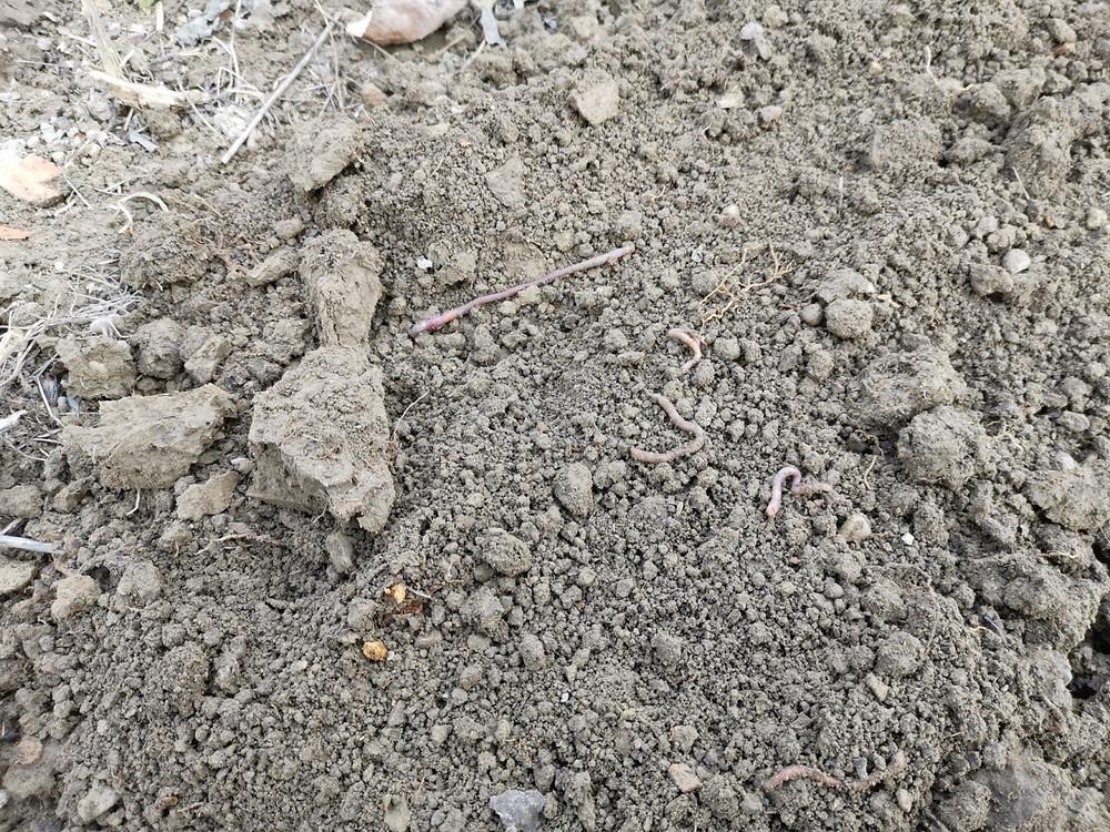Területen kitermelt termőföld, és a kitermeléskor feltárt üreg belseje.  Talaj szerkezete puha porhanyós