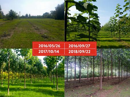 Mikor kell a Cotevisa 2  ipari császárfa ültetését megcsinálni?!