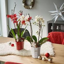 Kerámia kaspó lakás dekor termékek QX-Im