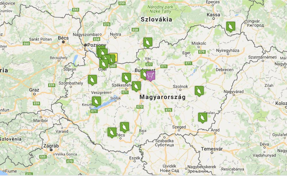 Paulownia Planet Cotevisa2 ültetvények Magyarországon