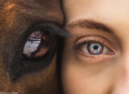 Pferd und Feuer - Persönlichkeitsentwicklung der besonderen Art