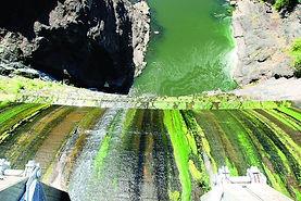 algae dam.jpg