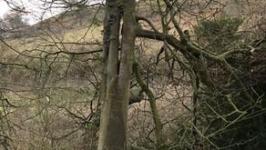 The needle-eye tree