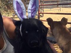 Bunny Ears Bo.jpg