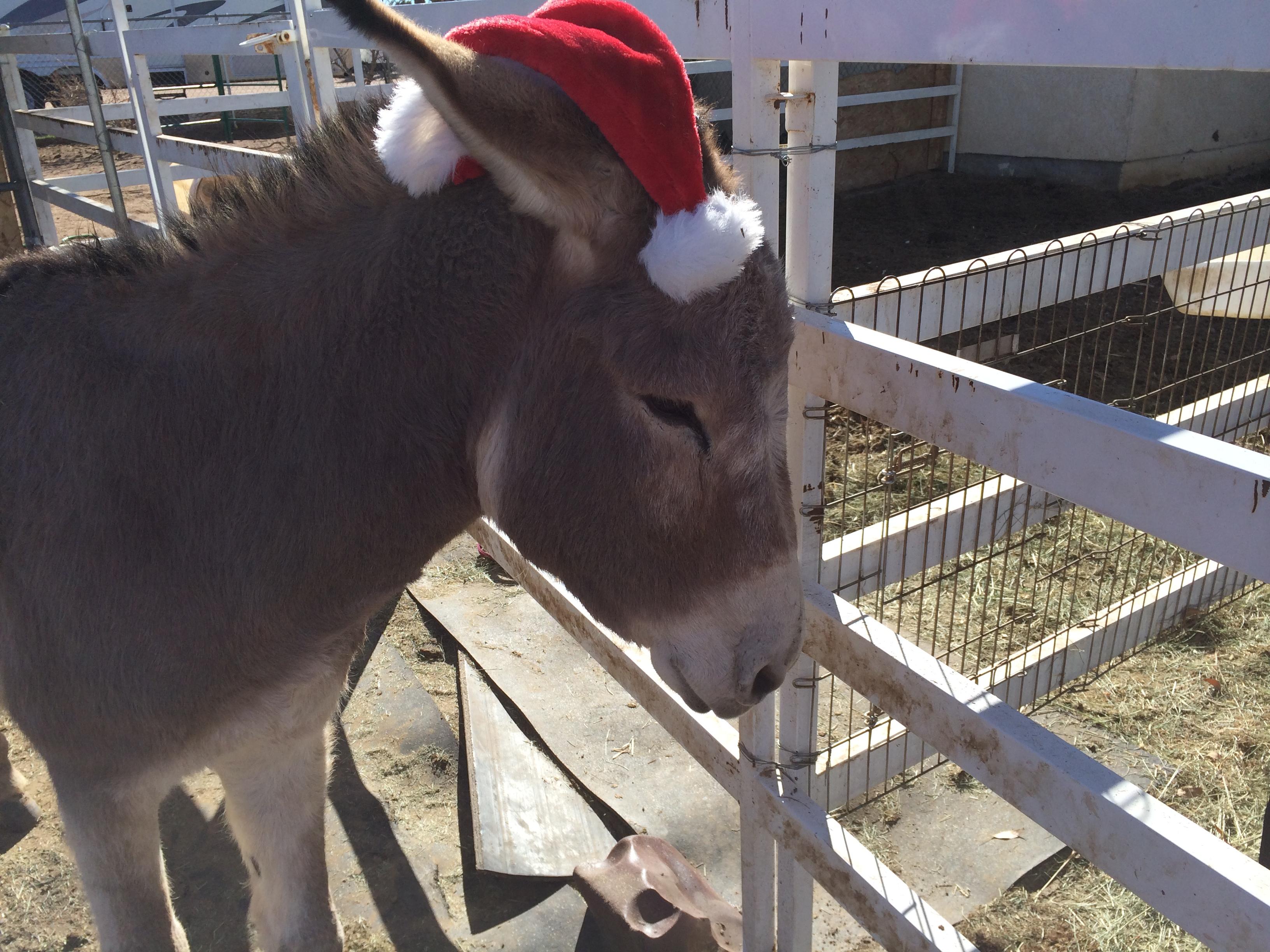 Christmas Gasston