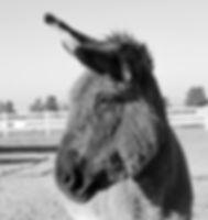 Eeyore 5.jpg