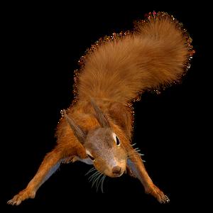Flat Squirrel Moments