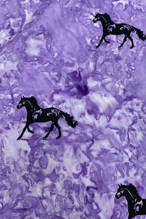 blackbeauty horse coy