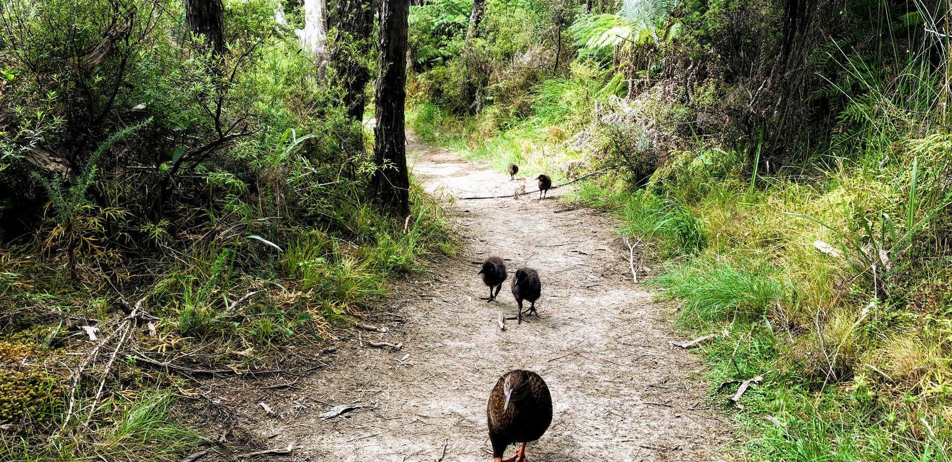 エイベルタズマン国立公園ウォーク ウェカの家族に遭遇
