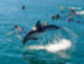 Swimming-with-dusky-Dolphins--1024x593.j
