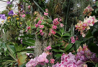 Orchideen.jpg
