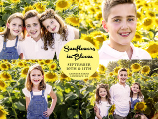 Sunflowers in Bloom at Grinter Farms!