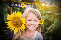 sunflower+portraits+topeka+ks